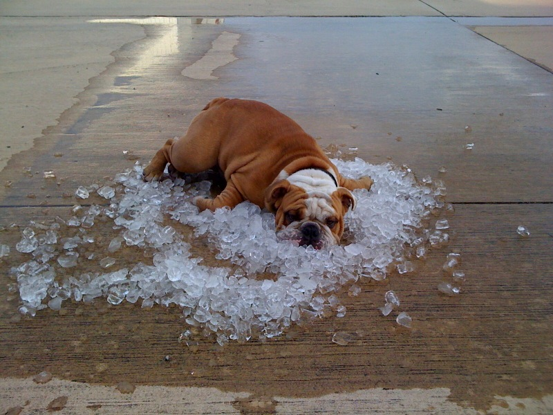 jak na letní teploty
